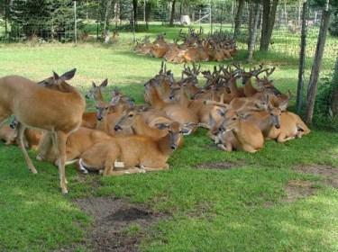 1417774154_Malsi-Deer-Park