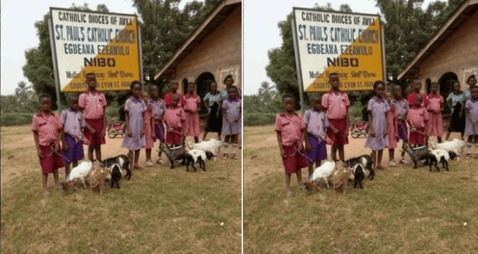 Pupils Receiving Goats