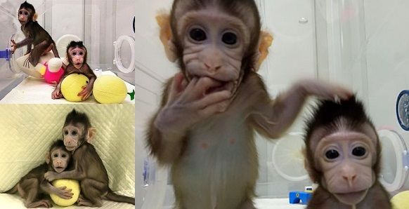 [Image: Chinese-Scientists-Clone-Monkeys2-1.jpg?...=582%2C298]