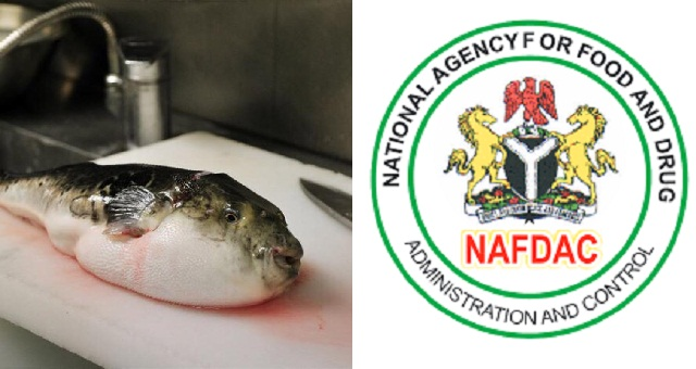 """Image result for """"Don't consume Puffer fish, it contains deadly poison""""- NAFDAC warns."""