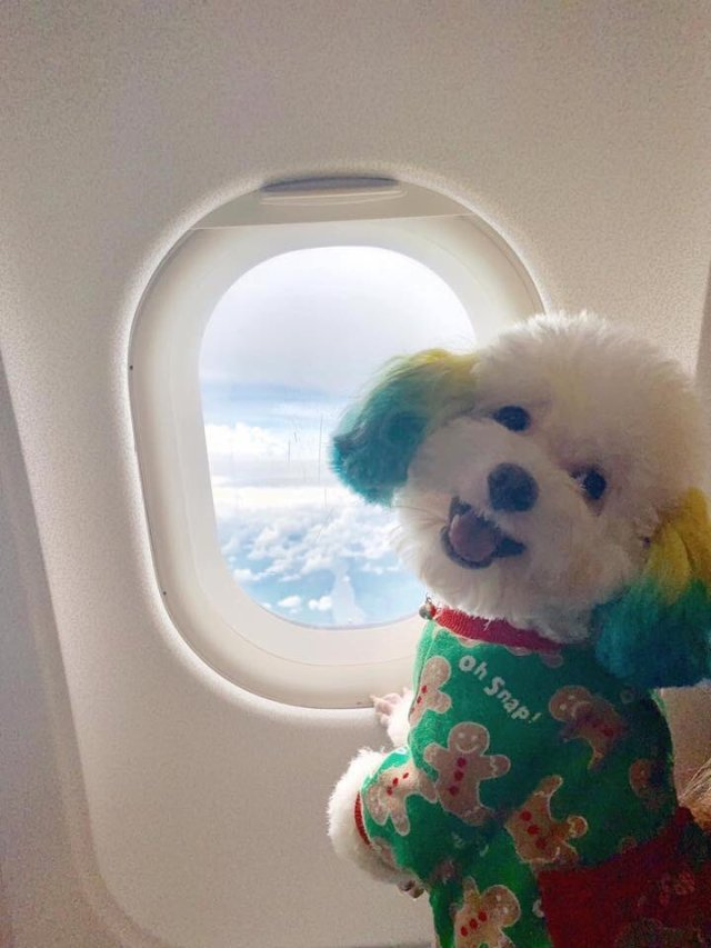 "Pet passports2 - Lady Trending on Twitter for posting her Pet Passport ""stop leaving your pets, they wanna travel too"""