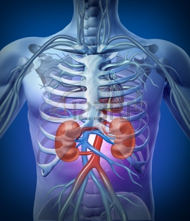 How to Protect your Kidneys