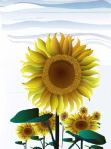 7 reasons sunflower oil scores high as a healthy oil