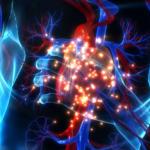 7 factors that affect heart rate