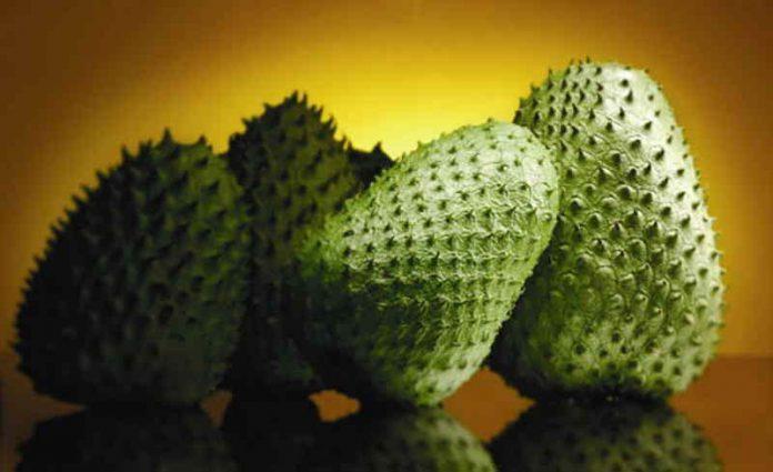 Effective health benefits of Guanabana Fruit - Yabibo