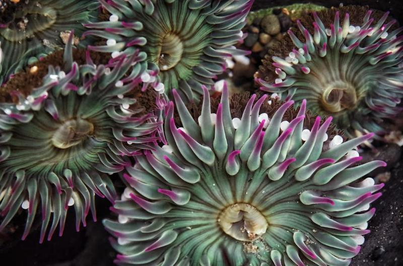 Sea Anemones by Girl In Water Photography
