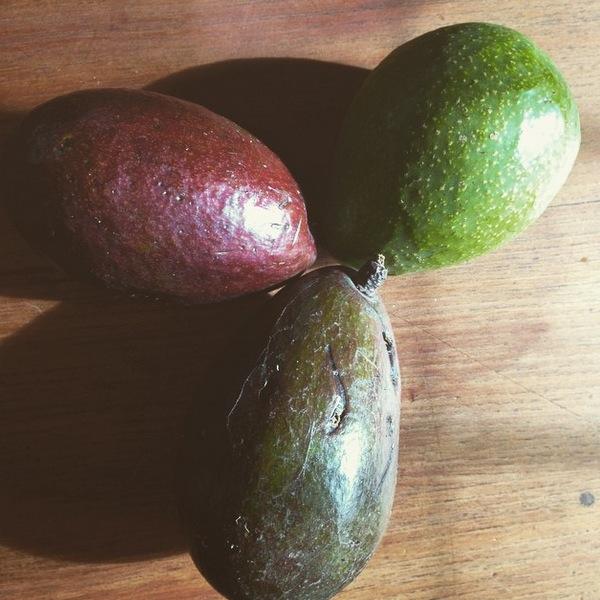 Avocado_Palta_Aguacate_1