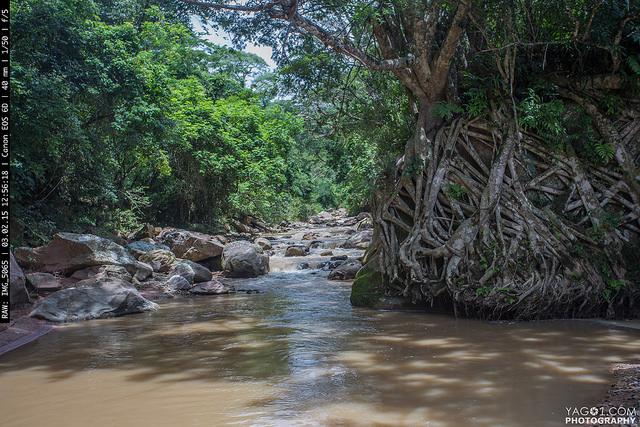 Jungle river of Paredones
