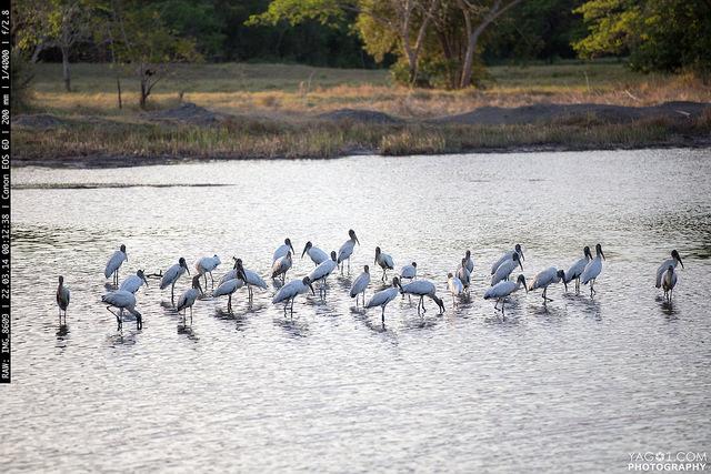 Costa Rica Ensenada Lodge and national wildlife refuge in Manzanillo Puntarenas