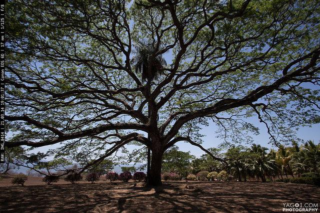 Tree of life - PermaTree 15361362723_022bb69ea7_z