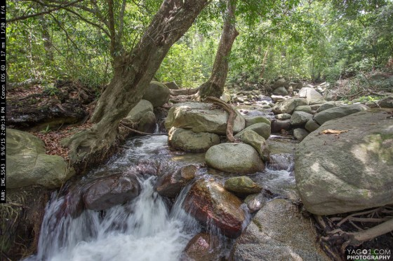 Tropical Rain Forest Creeck in Sierra Nevada Colombia