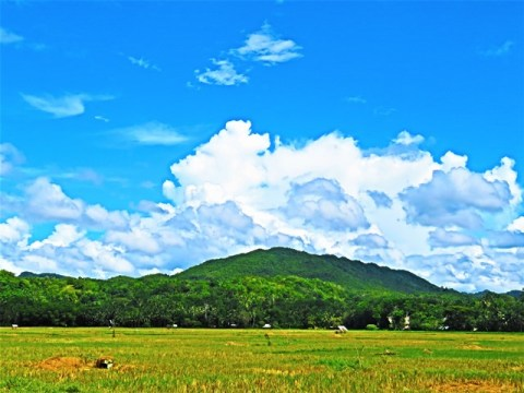 Philippines Bohol rizières