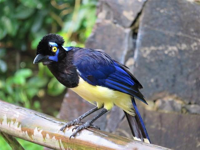 Argentine Chutes d'Iguazu oiseau