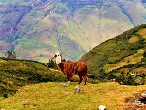 Pérou Chachapoyas Kuelap