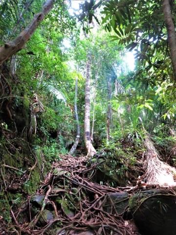 Bornéo Parc National de Bako végétation