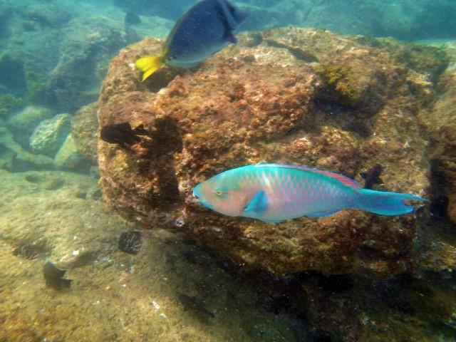 Galapagos ile Floreana snorkeling poissons