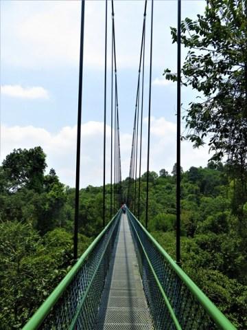 Singapour résevoir MacRitchie pont