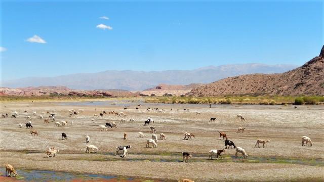 Argentine Cafayate Quebrada de las Conchas