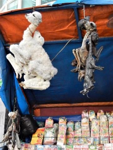 Bolivie La Paz marché des sorcières foetus lama