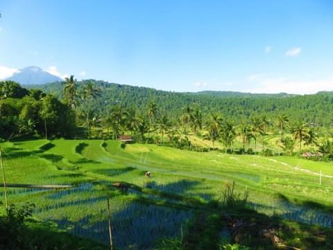 Bali rizières munduk