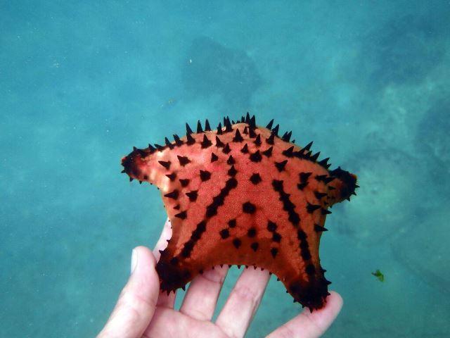 Galapagos ile Espanola snorkeling étoile de mer