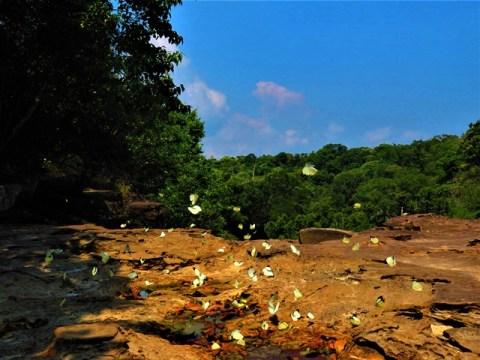 Cambodge Kampot Bokor cascade Popokvil