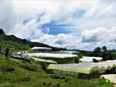 Malaisie Cameron Highlands
