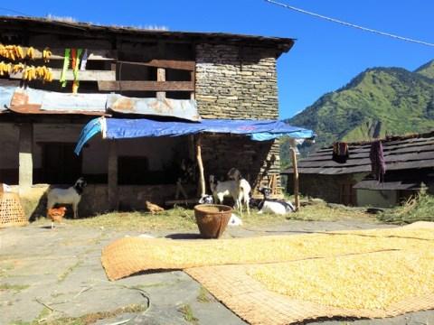 Népal Trek Circuit des Annapurnas Ghorepani