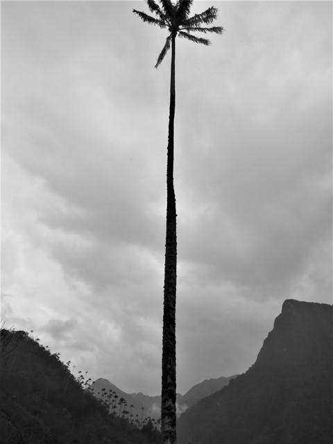 Colombie Salento vallée de Cocora