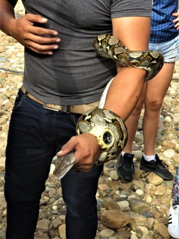 Malaisie Taman Negara python
