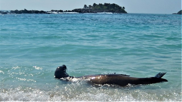 Galapagos ile Santa Fe Lions de mer