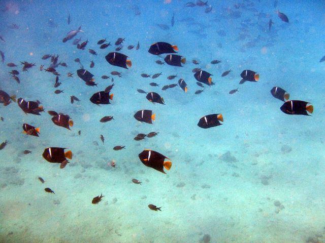 Galapagos ile Santa Fe snorkeling poissons