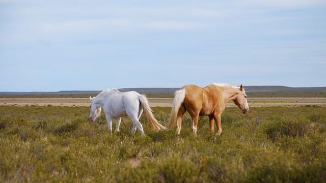 Argentine Péninsule Valdès chevaux