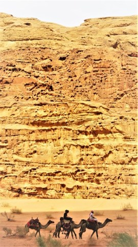 Jordanie désert Wadi Rum dromadaires