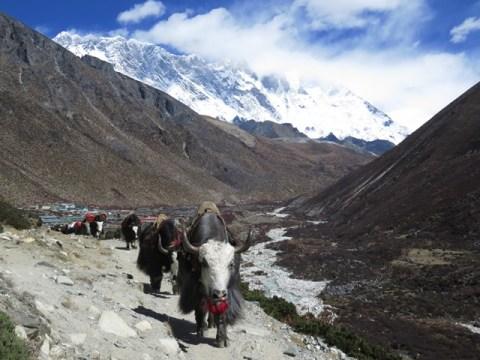Népal Trek de l'Everest Dingboche