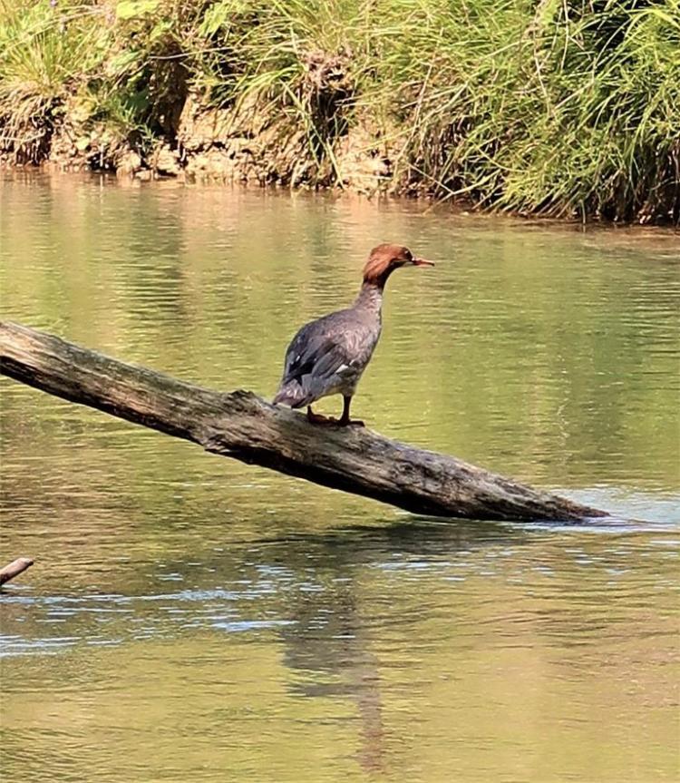 Annecy réserve naturelle du bout du lac