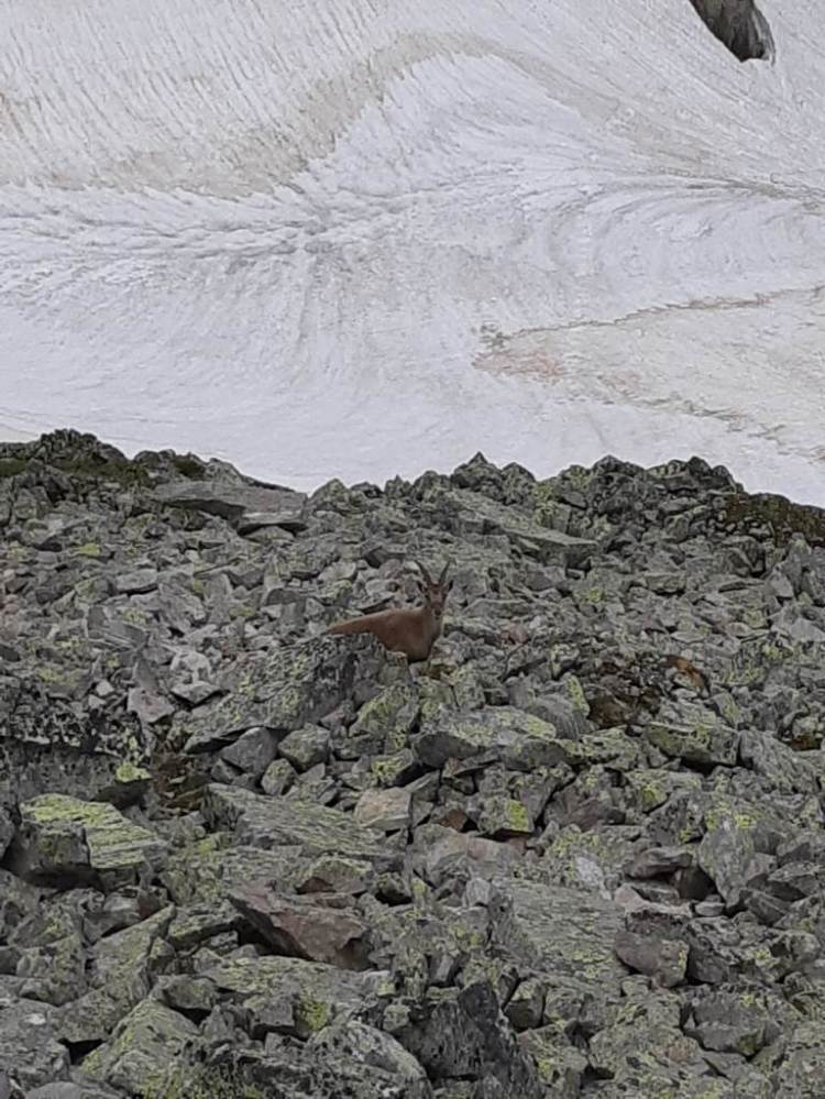 La Flégère - Floria - Alpinisme