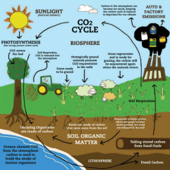 Simple Food Chain Diagram Autometer Air Fuel Gauge Wiring Managing Rangelands To Capture Co2 » Yale Climate Connections