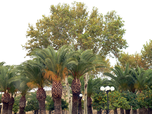 palm grove in Fez