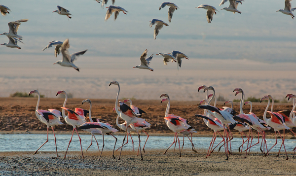 Birds near Eilat, Israel, photo by Dafna Tal, courtesy of Israel Ministry of Tourism