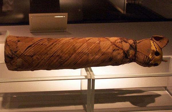 a cat mummy at Luxor's Mummification Museum