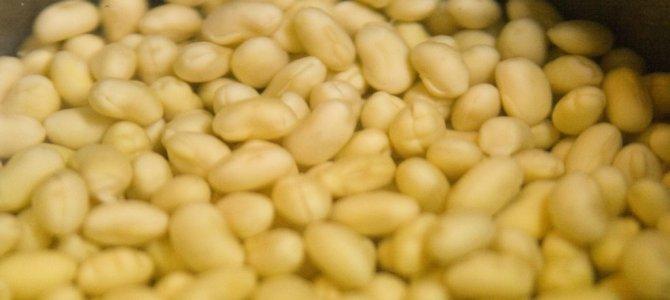 TANICA ヨーグルティアで納豆を作ろう