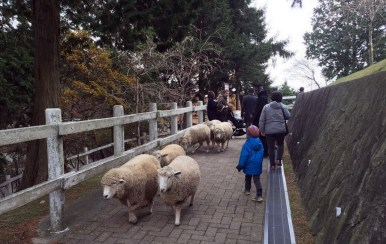 忽然在路上狂奔而來的綿羊群,孖兔嚇壞了XD