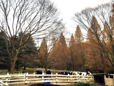 跟山下不同,這裡的樹很多都已經落葉落光光了。