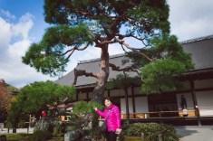 這裡的松樹也很美