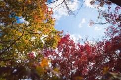 停車場附近有一個小巧的樹林,裡面配搭了好幾個顏色的植物,配上藍天白雲,真的很漂亮!