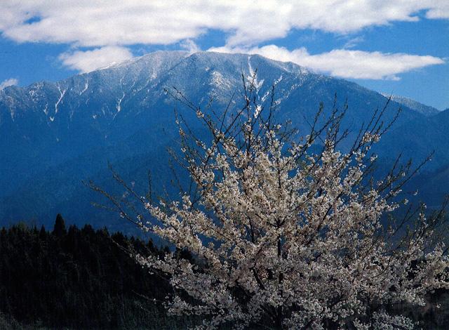 恵那山 - えなさん:船伏山(ふなふせやま):標高2,191m-中央アルプス:恵那山周辺 - Yamakei Online / 山と溪谷社