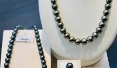 黒真珠ネックレス入荷しました。
