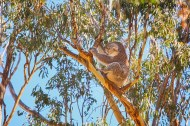 Just-Sitting-Yanchep-National-Park-Perth-YPW2.11-V1-