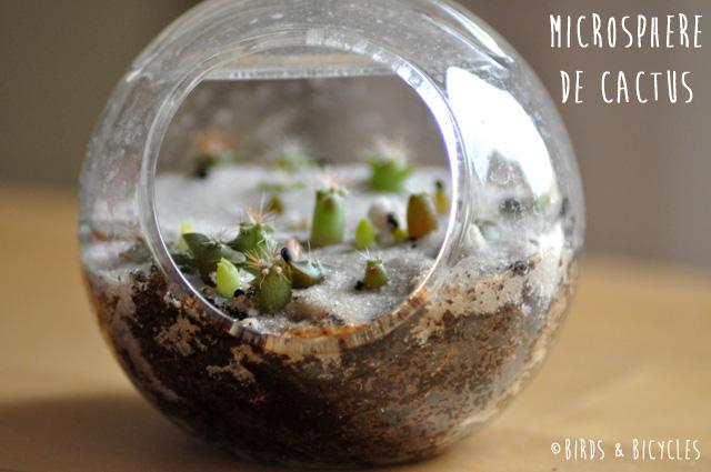 Microsphere de cactus - Nature & Découvertes
